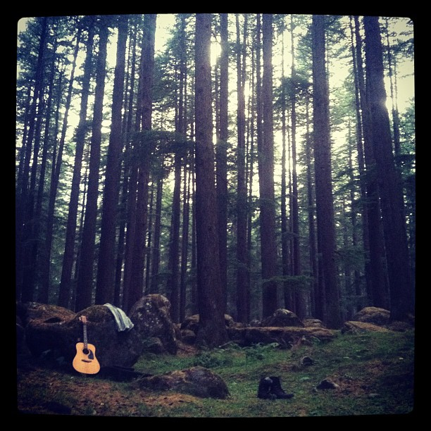 Earnings Disclaimer >> Forest Guitar | About - StartMotionMEDIA Video Production | Kickstarter | Startup | Business Videos